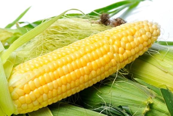 فوائد الذرة للامساك والقولون والبواسير