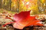 6 طرق لـ الاستفادة من اوراق الشجر
