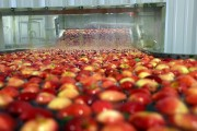 طريقة غسل التفاح الصحيحة لازالة المادة الشمعية