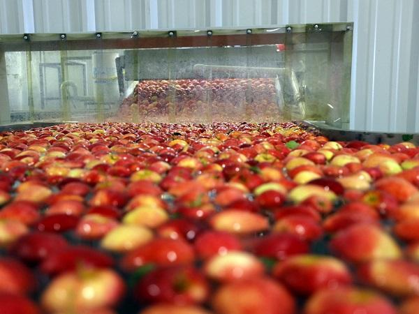 غسل التفاح