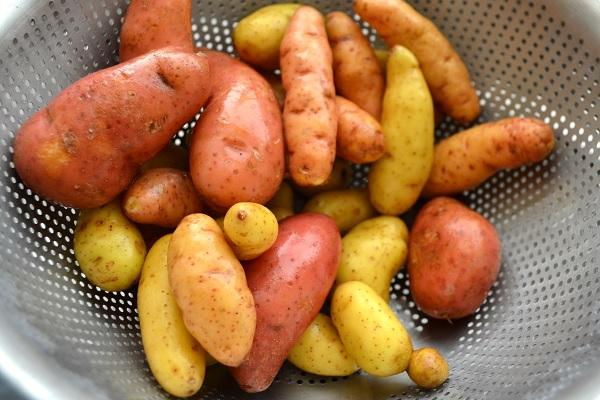 انواع البطاطس المقليه