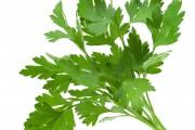 فوائد الكزبرة الخضراء السحرية العشرة