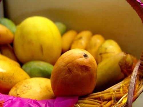 الطريقة الأسرع لـ انضاج ثمار المانجو