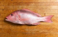 اغلى سمك في العالم لن تصدقوا كيف يطبخ