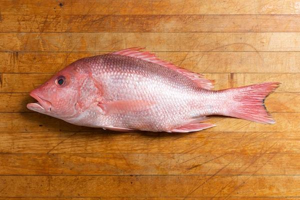 اغلى سمك في العالم
