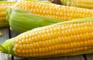 ما هي فوائد الذرة الصفراء ؟