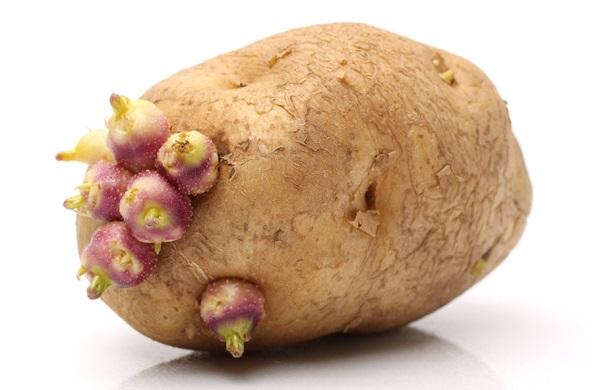 ما هي افضل طريقة لحفظ البطاطس ؟
