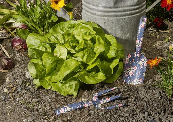 زراعة الخضار في المنزل