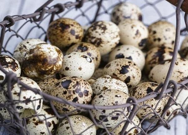 فوائد بيض الفري للرجال