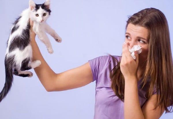 أعراض حساسية القطط