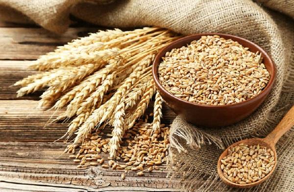ما هي اعراض حساسية القمح