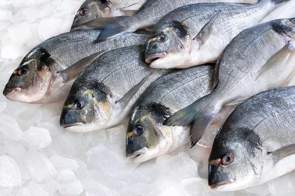 طلب سمك اون لاين دبي